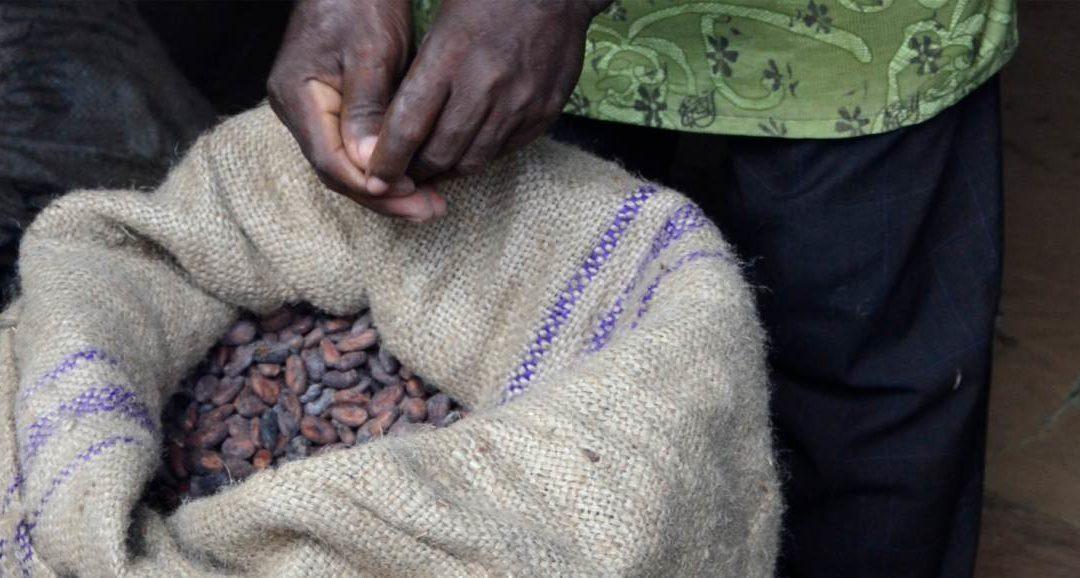 Aktuelle Zahlen der Kakaovermahlung