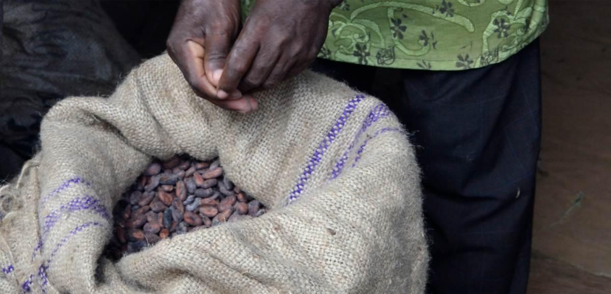 Kakaobohnen im Sack mit Mann