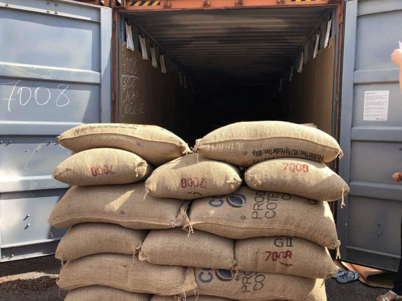 Sacke voller Kakaobohnen werden in den LKW geladen