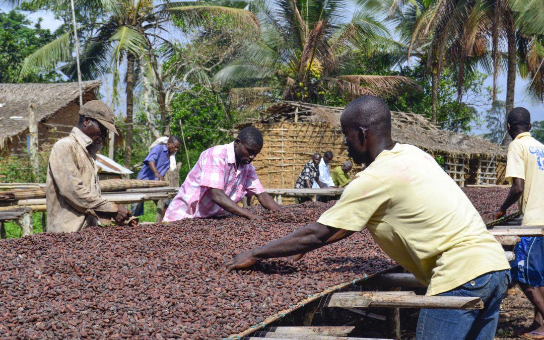 """Deutsche Süßwarenindustrie begrüßt Verabschiedung des Internationalen ISO-Standards """"Nachhaltiger und rückverfolgbarer Kakao"""""""
