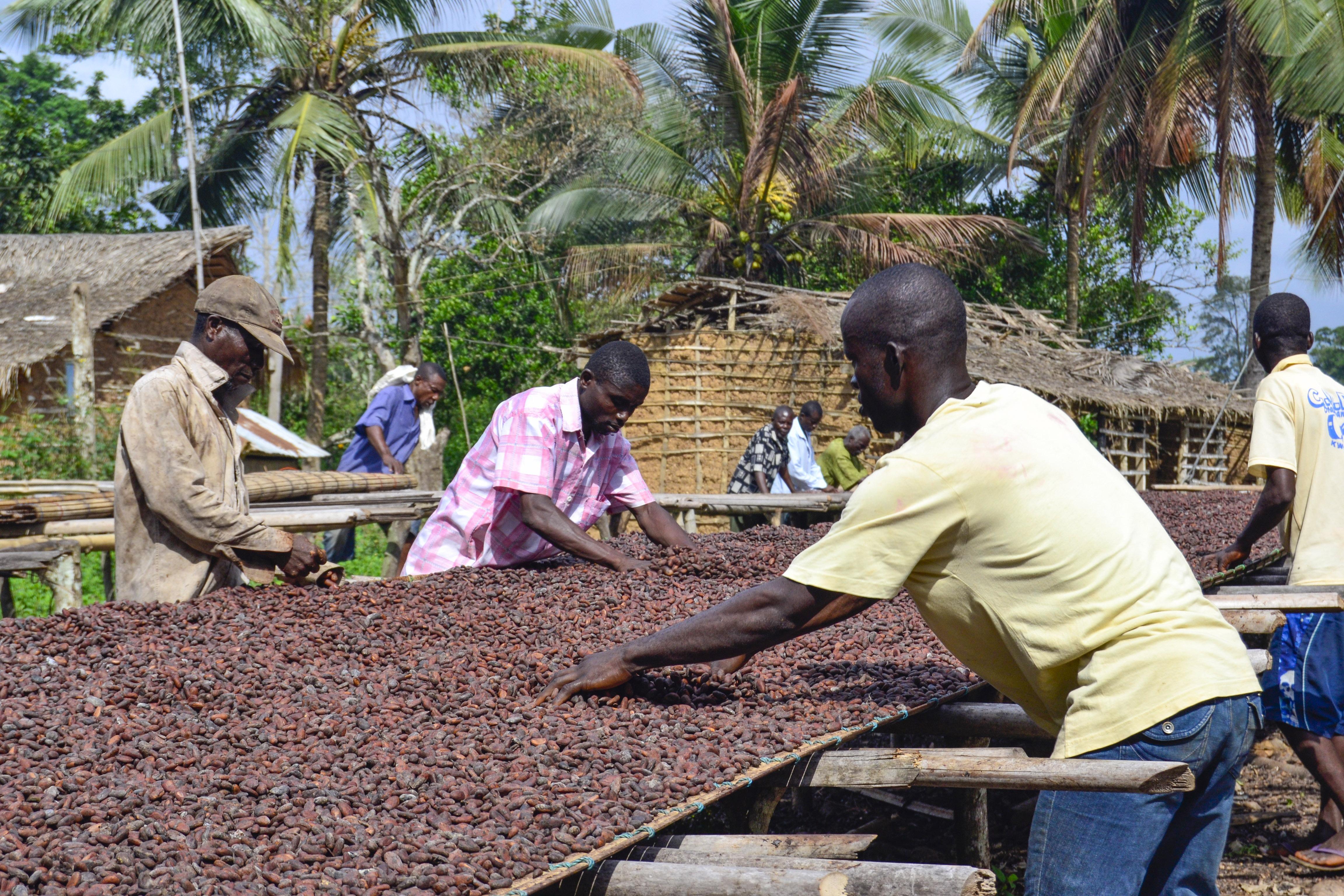 Die natürlichen Röstung der Kakaobohnen