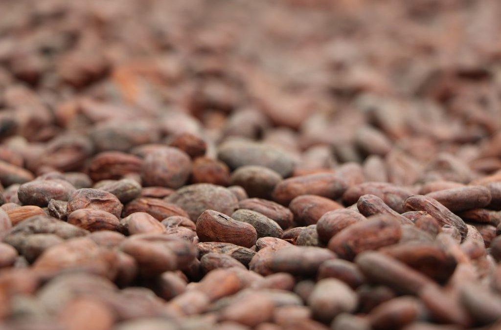 Kakaovermahlung geht leicht zurück